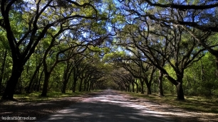 Wormsloe Archway of trees