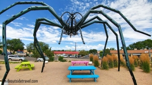 Santa Fe Meow Wolf Spider