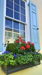 Charleston Yellow Window Box