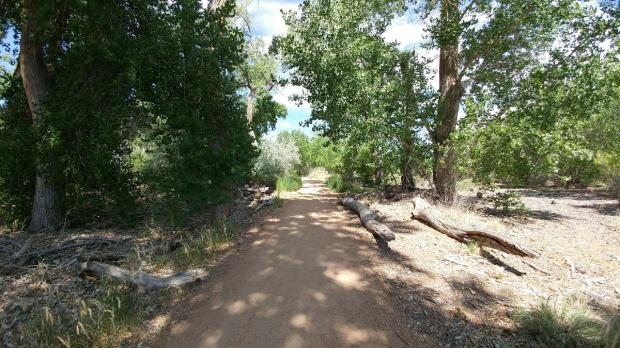 Albuquerque bike trail
